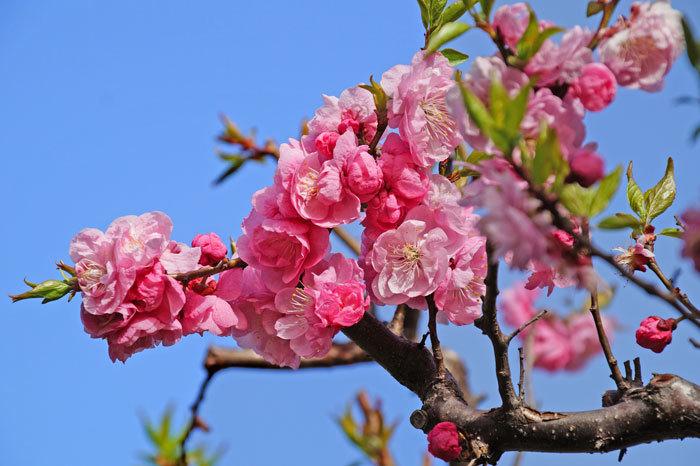 梅の花_d0162994_08295306.jpg
