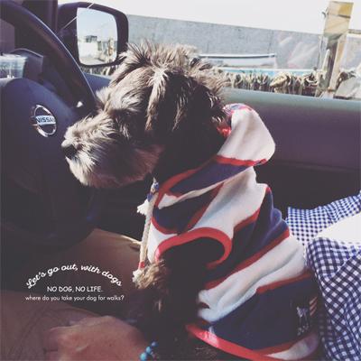 犬とおでかけ 前編_d0174704_20543240.jpg