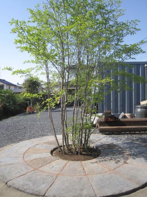 とある、 晴れた日の太田市・足利市外構工事のお店 garden-flow (*´▽`*)_e0361918_14405600.jpg