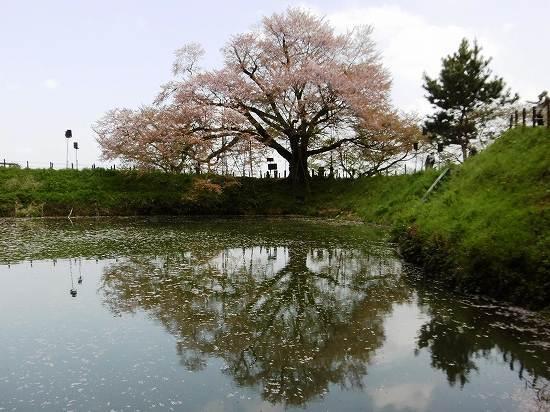 季楽櫨山 福岡の観光&グルメ_d0086228_22393242.jpg