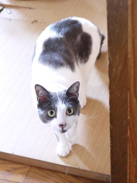 猫のお留守番 ルナくん編。_a0143140_20312480.jpg