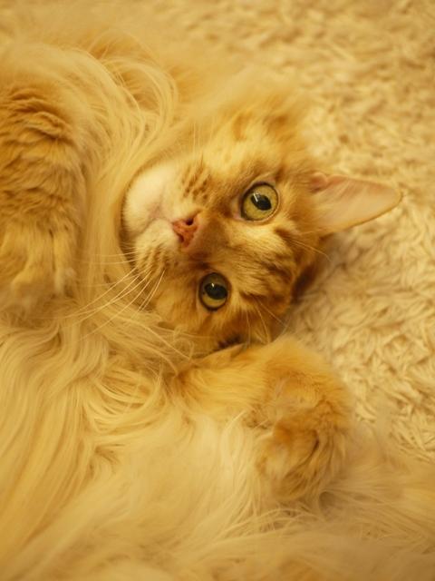 猫のお留守番 ラメルくん編。_a0143140_20502227.jpg