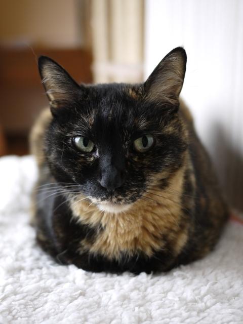 猫のお留守番 ワサビちゃん天ちゃん麦くん茶くん編。_a0143140_21330435.jpg