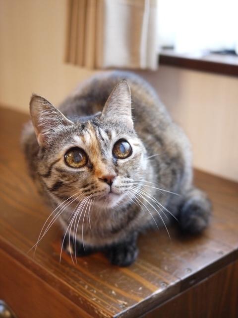 猫のお留守番 ワサビちゃん天ちゃん麦くん茶くん編。_a0143140_21331840.jpg
