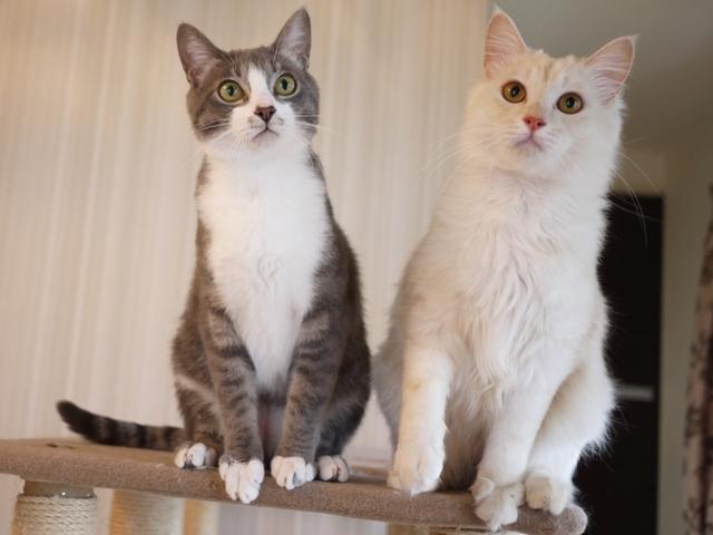 猫のお留守番 ワサビちゃん天ちゃん麦くん茶くん編。_a0143140_21334811.jpg