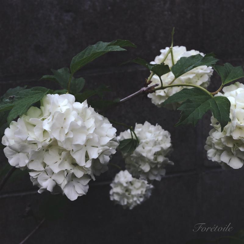le jardin_f0377243_21095888.jpg