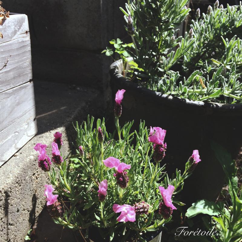 le jardin_f0377243_21125519.jpg