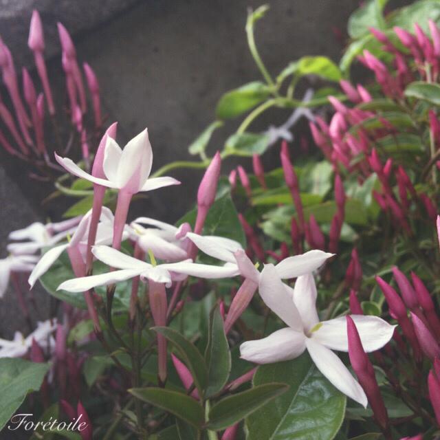 le jardin_f0377243_21171278.jpg
