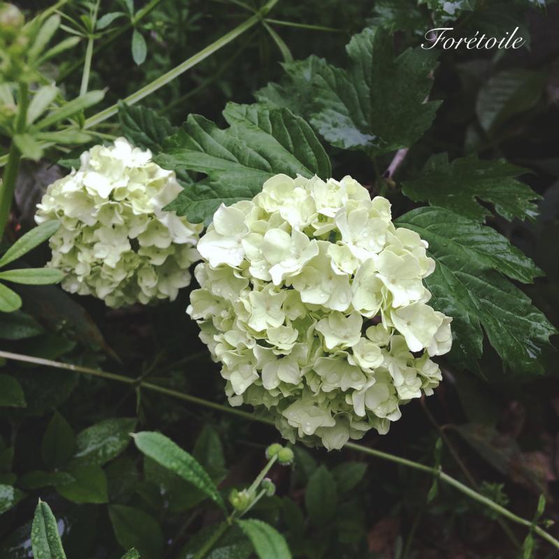 le jardin_f0377243_21190532.jpg