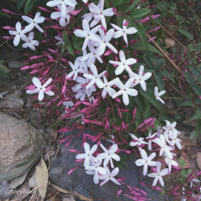 le jardin_f0377243_21195212.jpg