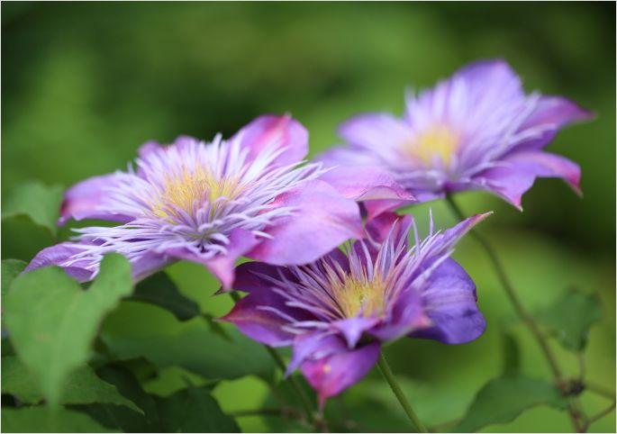 昨日の庭の花 ②_a0256349_17291872.jpg
