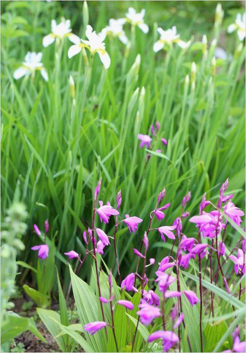 昨日の庭の花 ②_a0256349_17313196.jpg