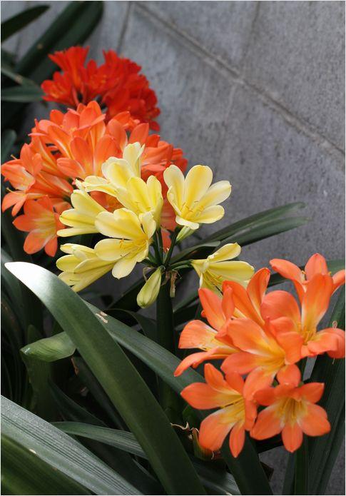 昨日の庭の花 ②_a0256349_1731666.jpg
