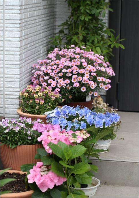 昨日の庭の花 ②_a0256349_17334927.jpg