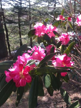 軽井沢の花、今です。_a0163160_21544002.jpg