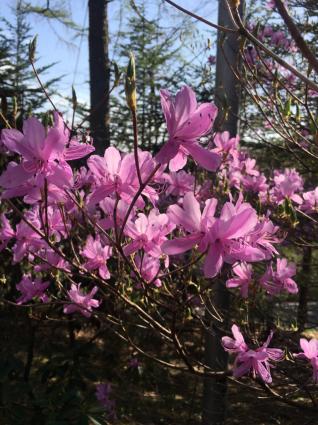 軽井沢の花、今です。_a0163160_21544174.jpg