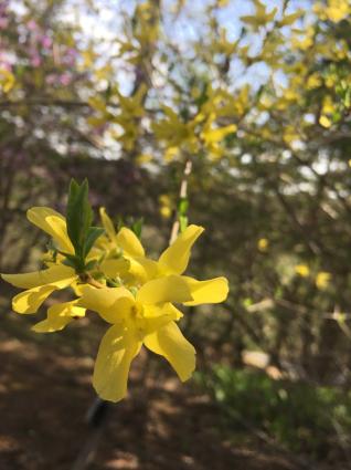 軽井沢の花、今です。_a0163160_21544233.jpg
