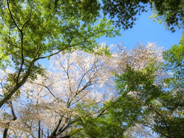 GW明けの軽井沢*桜と新緑の競演♡_f0236260_02464330.jpg