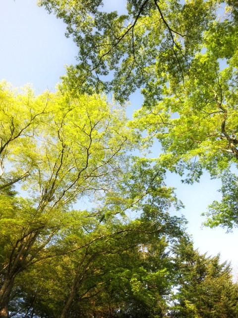 GW明けの軽井沢*桜と新緑の競演♡_f0236260_02470220.jpg