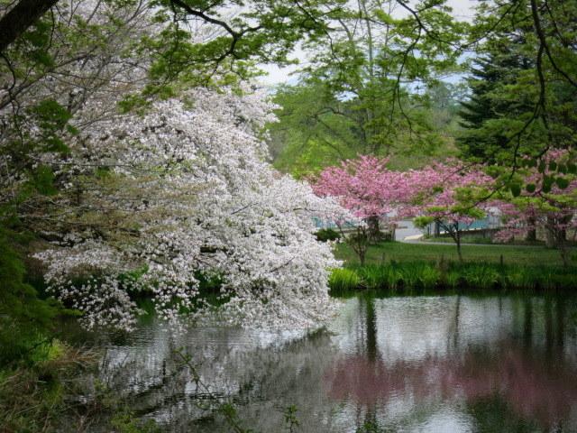 GW明けの軽井沢*桜と新緑の競演♡_f0236260_15544341.jpg