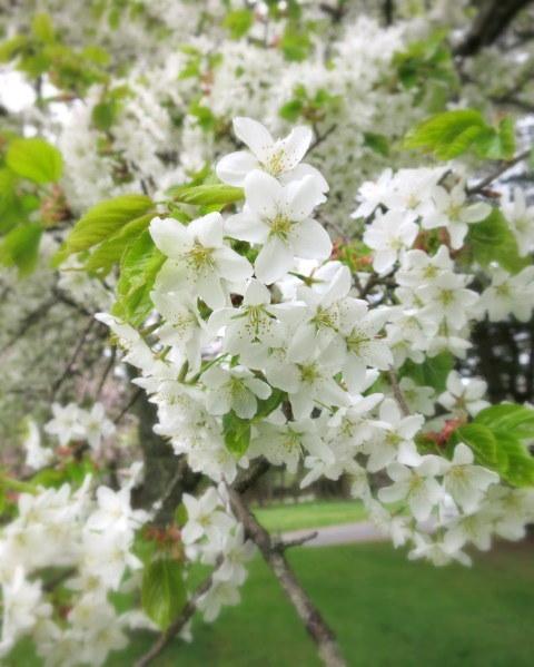 GW明けの軽井沢*桜と新緑の競演♡_f0236260_19561056.jpg