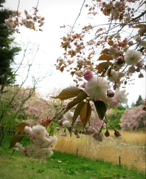 GW明けの軽井沢*桜と新緑の競演♡_f0236260_19572721.jpg