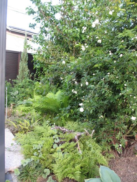 ガーデンリビングから見える初夏の庭_a0243064_19362434.jpg