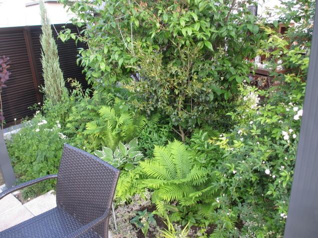 ガーデンリビングから見える初夏の庭_a0243064_19373687.jpg