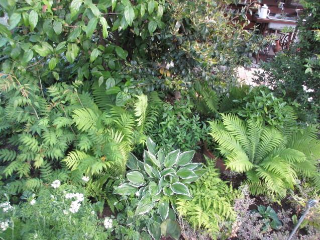 ガーデンリビングから見える初夏の庭_a0243064_19390658.jpg