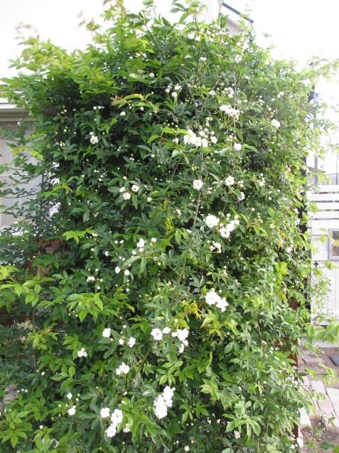 ガーデンリビングから見える初夏の庭_a0243064_19421477.jpg