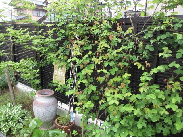 ガーデンリビングから見える初夏の庭_a0243064_19465112.jpg