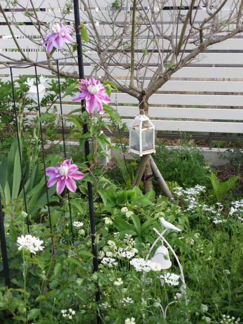 ガーデンリビングから見える初夏の庭_a0243064_19591201.jpg