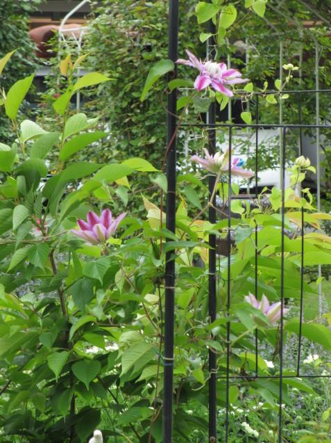 ガーデンリビングから見える初夏の庭_a0243064_20003162.jpg
