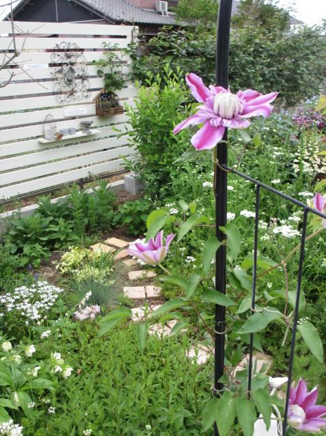 ガーデンリビングから見える初夏の庭_a0243064_20005279.jpg
