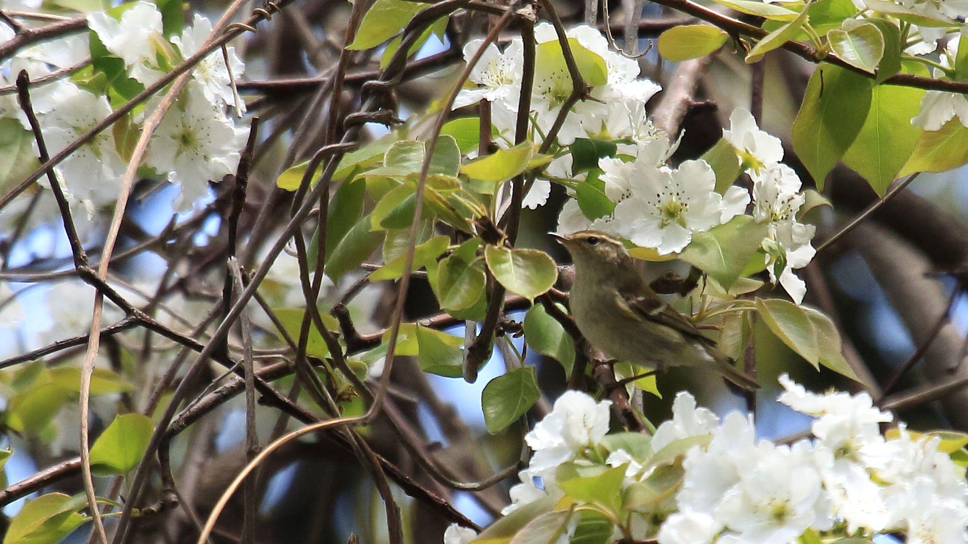 日本海の離島の鳥達その3_f0105570_21325630.jpg