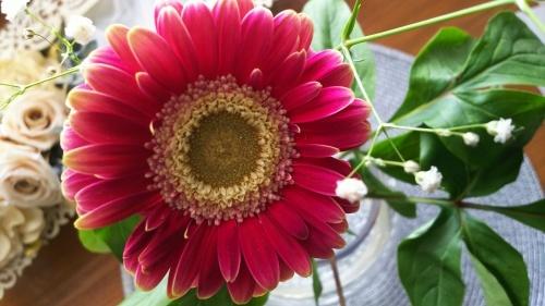 神戸から、お花が笑った_a0098174_00081904.jpg