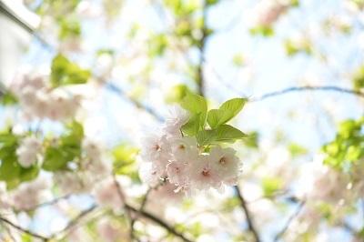 b0068780_14245490.jpg