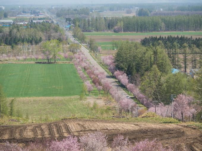 「村道沿いの一本桜」と「桜六花公園」村の桜が見頃です!_f0276498_16142121.jpg