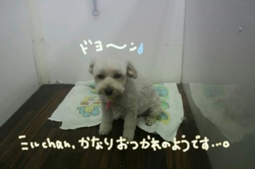 b0130018_00461421.jpg