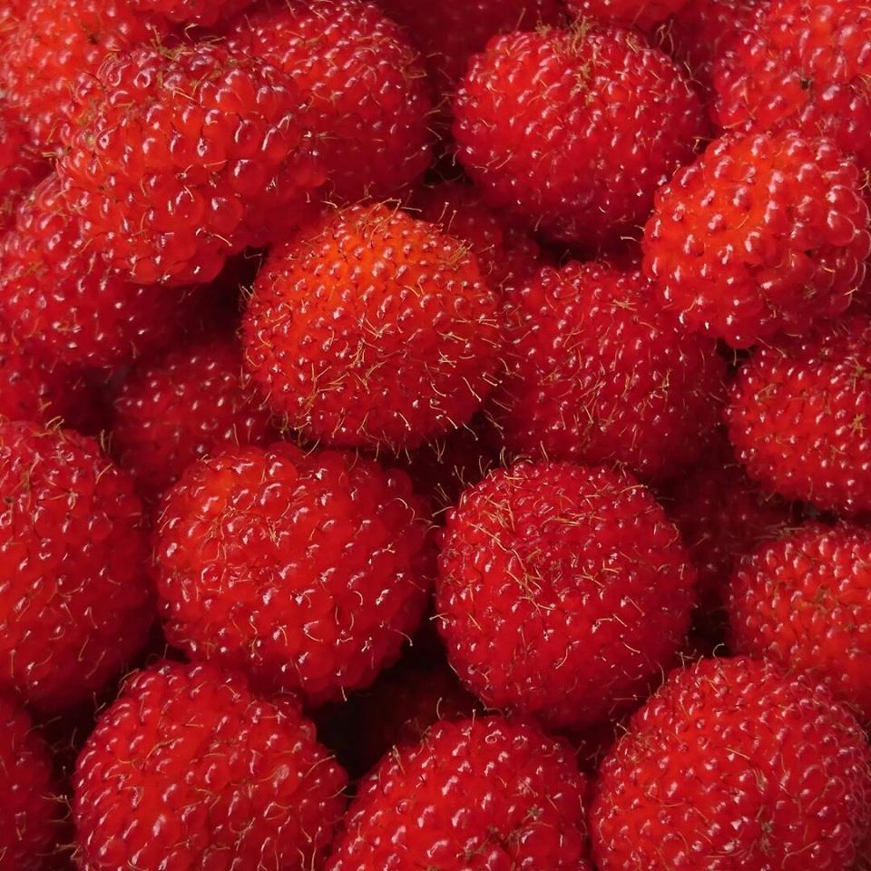 「野イチゴ」の季節です♪_a0125419_17322295.jpg