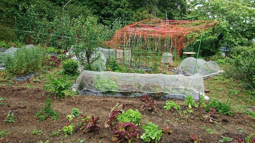 「野イチゴ」の季節です♪_a0125419_17460548.jpg