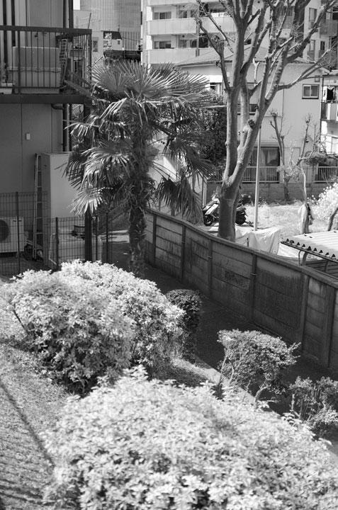 神田川笹塚支流跡をあるく2017-2_b0058021_21482091.jpg