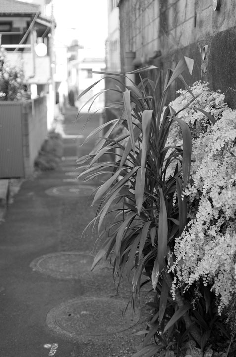 神田川笹塚支流跡をあるく2017-2_b0058021_21483749.jpg