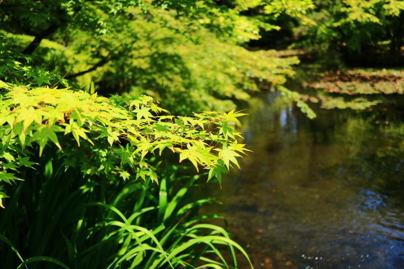 新緑の太閤園_f0209122_08565559.jpg