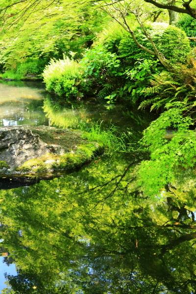 新緑の太閤園_f0209122_09065704.jpg