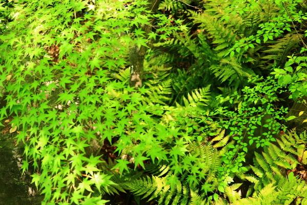 新緑の太閤園_f0209122_09101181.jpg