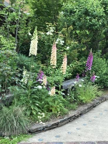 お客様のお庭散策・・・お庭を作られて6年、薔薇を始められて3年・・_b0137969_01522342.jpg
