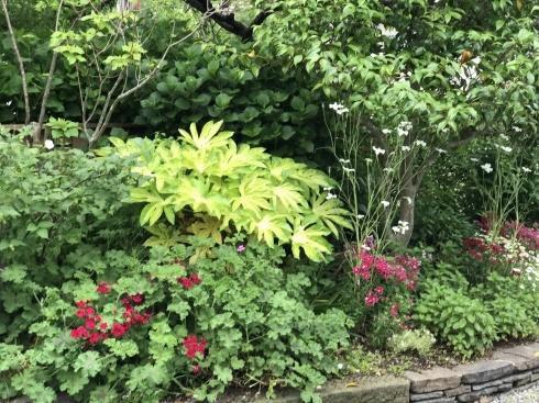 お客様のお庭散策・・・お庭を作られて6年、薔薇を始められて3年・・_b0137969_01524510.jpg