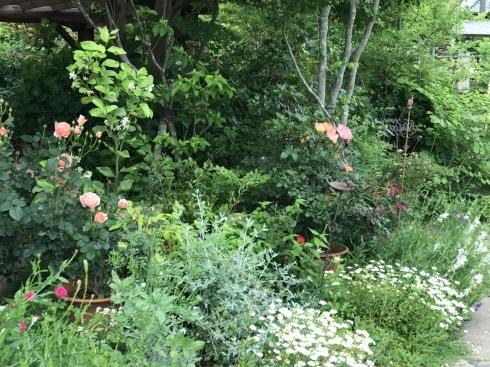 お客様のお庭散策・・・お庭を作られて6年、薔薇を始められて3年・・_b0137969_01531925.jpg