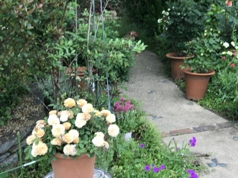 お客様のお庭散策・・・お庭を作られて6年、薔薇を始められて3年・・_b0137969_01534487.jpg